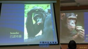 20170107_03與人類最接近的兩種猿